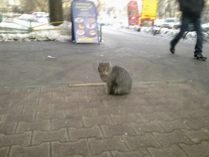 chat russe