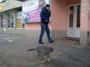 chat russe devant un magasin animalier