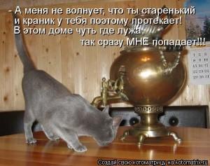 dlyakota.ru_kotiotkotomatrici_1326873416541